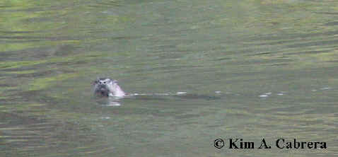 otter looks at me